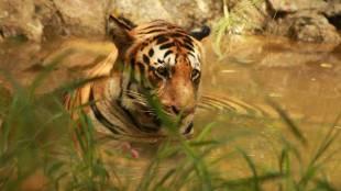 Sadiqali Photography, Wild Life Photography