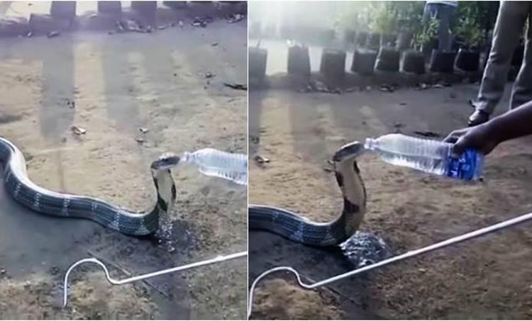 king cobra, water bottle, karnataka