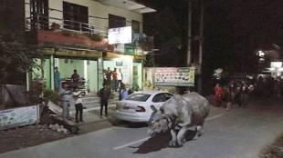 rhino, nepal
