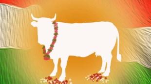 cowcow urine, ഗോമൂത്രം, Gujarat, ഗുജറാത്ത്, coronavirus, കൊറോണ വൈറസ്, covid 19, കോവിഡ് 19, cow urine benefits, cow urine medicinal properties,coronavirus,coronavirus cure,treatment,coronavirus symptoms,coronavirus death toll,coronavirus india confirmed cases,coronavirus death toll india,covid 19,lockdown,social distancing, iemalayalam, ഐഇ മലയാളം