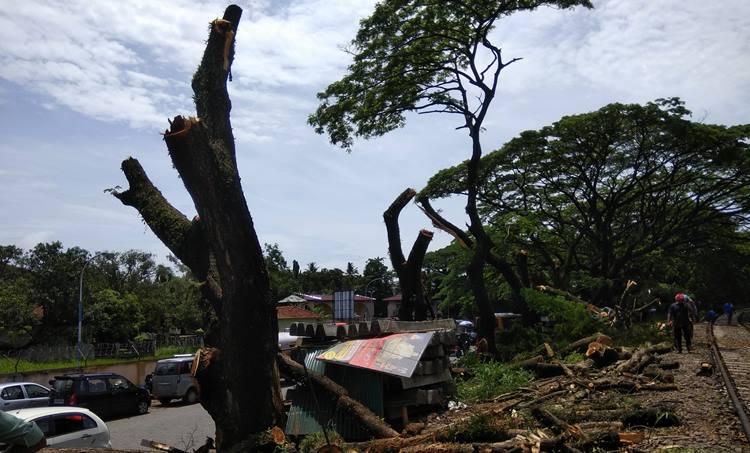 കൊച്ചിയിൽ മരങ്ങൾ വെട്ടിമാറ്റുന്നു, Deforestation in Kochi, കൊച്ചിയിൽ മരങ്ങൾ വെട്ടിനീക്കാൻ റയിൽവേ, Railway sanctio to cut trees in Kochi, huge trees in kochi, കൊച്ചിയിൽ തണൽമരങ്ങൾ മുറിച്ചുമാറ്റുന്നു