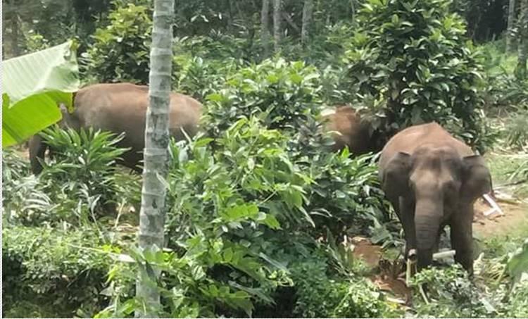 wild elephant, idukki, elephant attack,