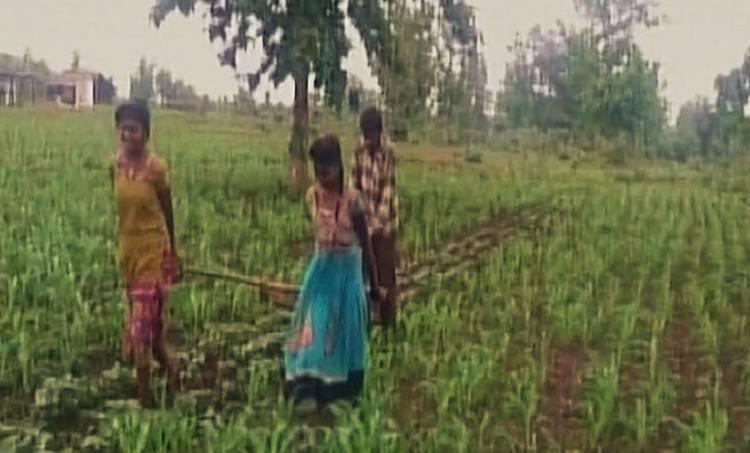 madhyapradesh, farmers