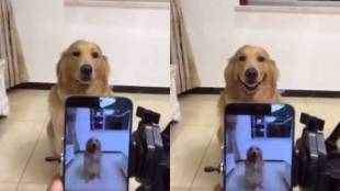 dog, smile, camera