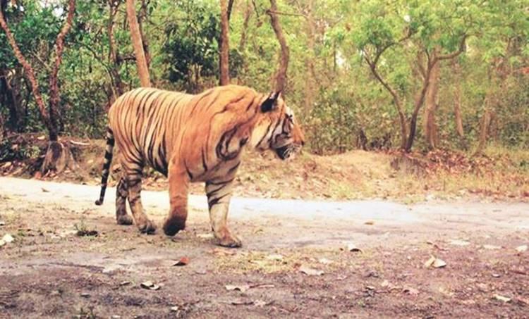 tiger , കടുവ, ie malayalam, ഐഇ മലയാളം