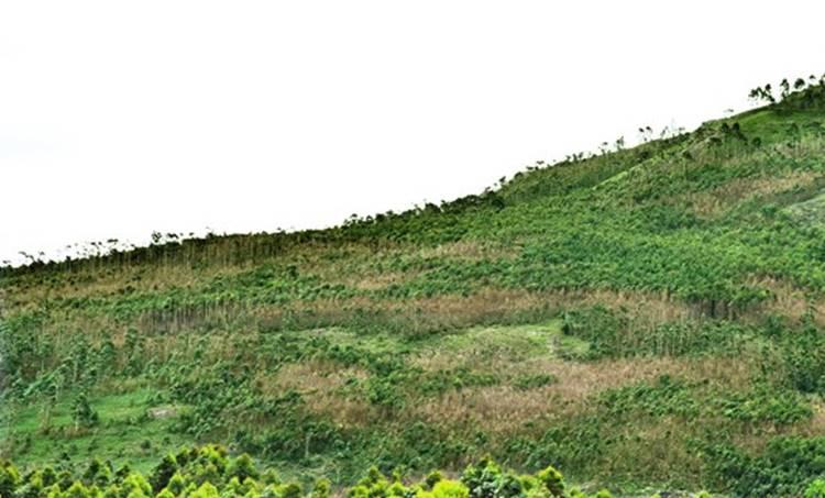 proposed land for neela kurinji sanctuary in 2006