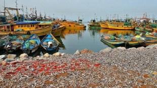 fisheries, fish, fishermen, fishing boat, മത്സ്യകൃഷി, മത്സ്യബന്ധനം, ie malayalam, ഐഇ മലയാളം