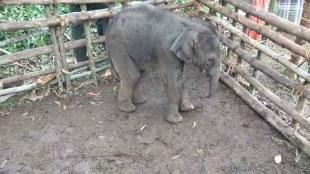 elephant,idukki