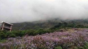 neelakurinji in eravikulam national park