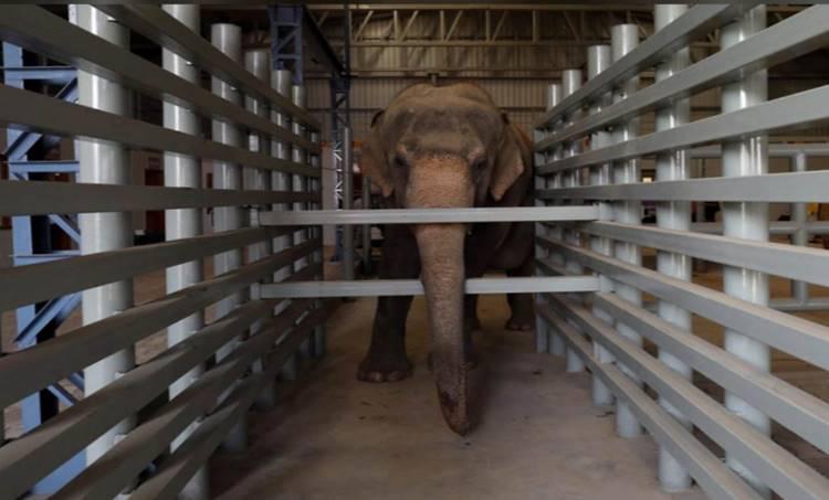 One Day Captive Elephant Census Postponed to November 29