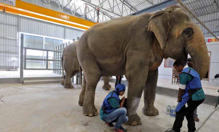hospital for elephant