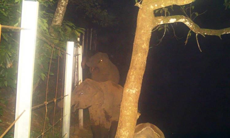 elephant, ie malayalam, കാട്ടാന, ഐഇ മലയാളം