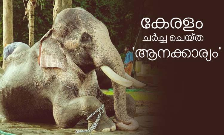 Thechikkottukavu Ramachandran തെച്ചിക്കോട്ടുകാവ് രാമചന്ദ്രൻ, Elephants in Kerala, Raman, Thechikkottukavu Elephant