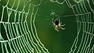 spider, ie malayalam