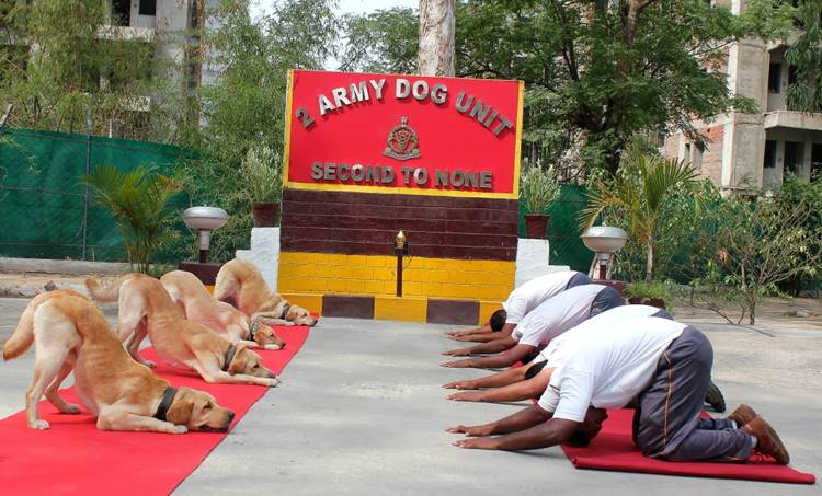 yoga day, dog unit, ie malayalam