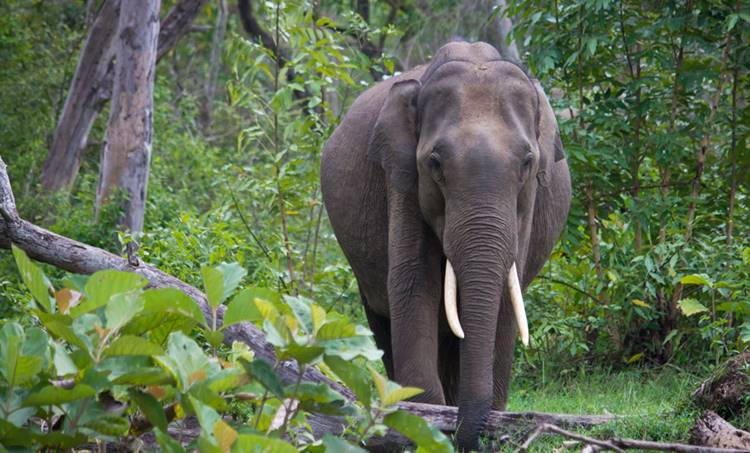 Elephant attack , ആന ആക്രമണം, Animals, മൃഗങ്ങള്, Elephant, ആന Chathisgarh, ചത്തീസ്ഗഢ്