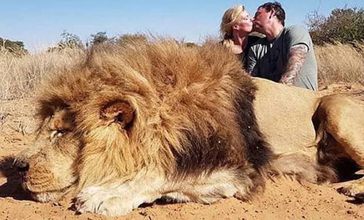 Animal Abuse, മൃഗങ്ങള്, Social Media, സോഷ്യല്മീഡിയ, lion, സിംഹ്, hunting, വേട്ട, protest പ്രതിഷേധം
