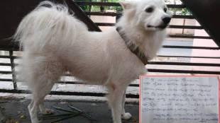 Pomeranian Dog, പോമറേനിയൻ പട്ടി, Dog, പട്ടി, Sreedevi S Kartha, ശ്രീദേവി എസ് കർത്ത, Social Media, സോഷ്യൽ മീഡിയ, iemalayalam, ഐഇ മലയാളം