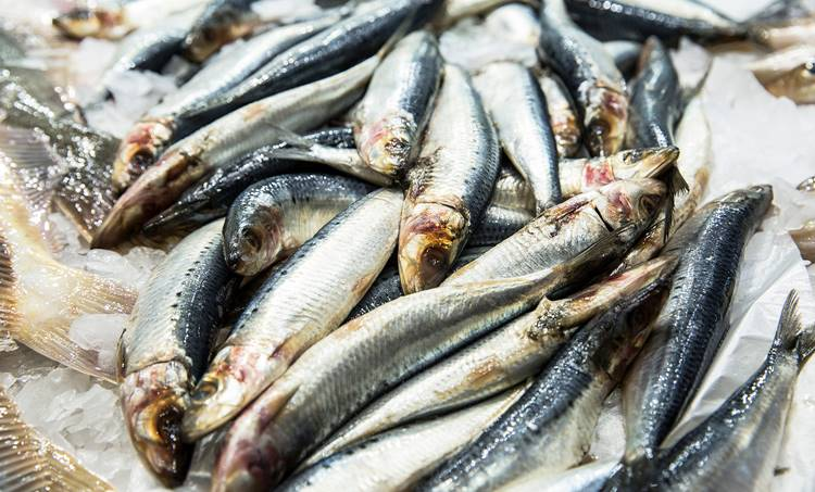 sardine, മത്തി, deficiency of sardine, മത്തിയുടെ കുറവ്, Researchers, ഗവേഷകർ, Central Fisheries Research Institute, കേന്ദ്ര സമുദ്രമത്സ്യ ഗവേഷണ സ്ഥാപനം, iemalayalam, ഐഇ മലയാളം