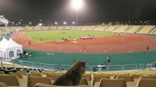 World Athletics Championships, ലോക അത്ലെറ്റിക് ചാമ്പ്യൻഷിപ്പ്, dutee chand, ദ്യുതി ചന്ദ്, Jinson Johnson, ജിൻസൺ ജോൺസൺ, Tejinderpal Singh Toor, iemalayalam, ഐഇ മലയാളം
