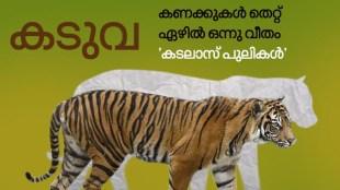 Tigers in india, ഇന്ത്യയിലെ കടുവകൾ, Tiger population india, ഇന്ത്യയിലെ കടുവകളുടെ എണ്ണം, how many tigers in india, Indian tigers, Tiger census 2019, tiger census, tiger pictures, express investigation, iemalayalam, ഐഇ മലയാളം