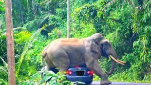 elephant, ie malayalam
