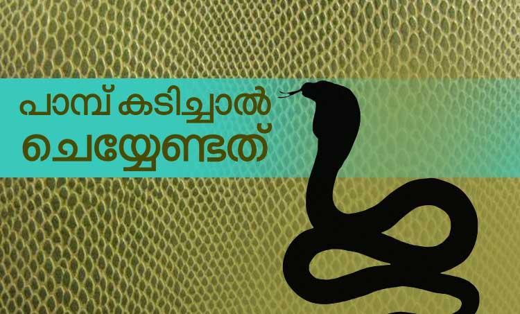 snake, ie malayalam