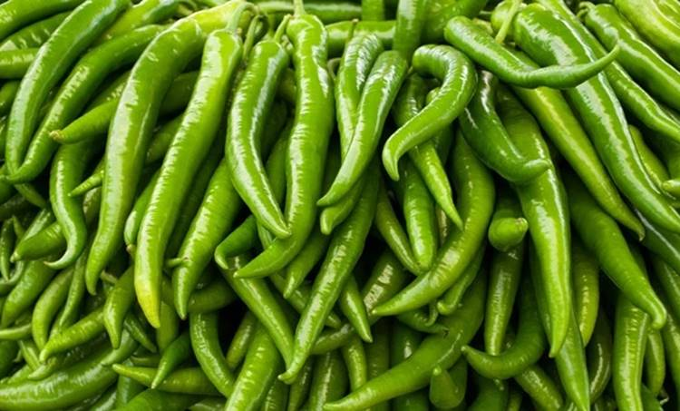 green chilli, ie malayalam