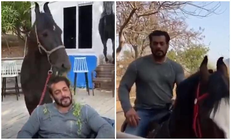 Salman Khan, Salman Khan photos,Salman Khan videos, Salman Khan lockdown, സൽമാൻ ഖാൻ, Indian express Malayalam, IE Malayalam