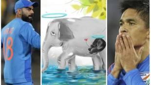 kerela elephant tragedy, kerela elephant, virat kohli, sunil chhetri, virat kohli elephant tragedy, elephant tragedy kerala, sports news,Elephant,Elephant Death, Elephant crackers, സുനിൽ ഛേത്രി, വിരാട് കോഹ്ലി, ആന, ആന കെണി, ആന ചരിഞ്ഞു, ie malayalam, ഐഇ മലയാളം