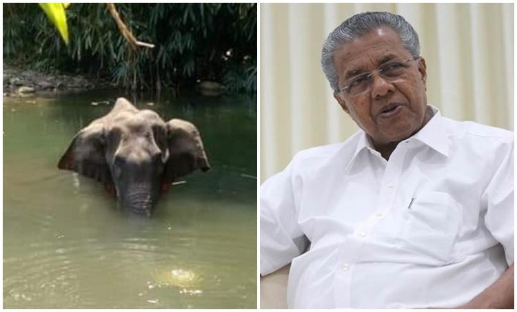 Elephant,Elephant Death, CM Pinarayi Vijayan, പിണറായി വിജയൻ, Elephant crackers, ആന, ആന കെണി, ആന മരണം, ie malayalam, ഐഇ മലയാളം