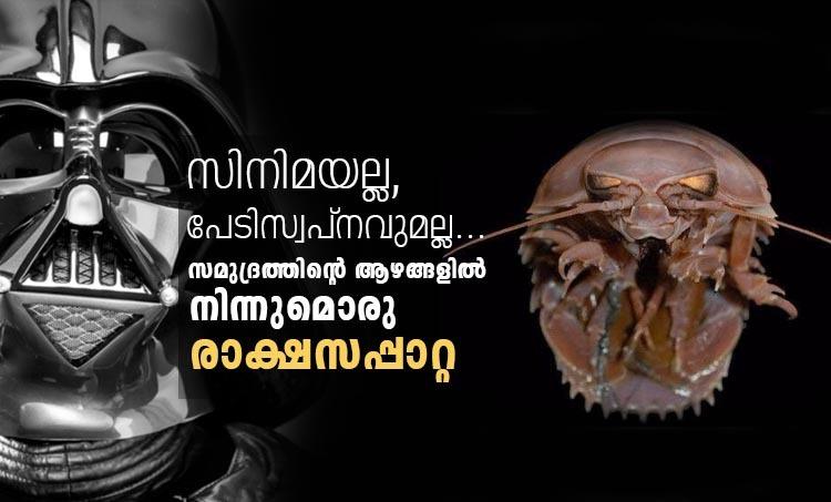 cockroach, rakasa cockroach, cockroaches india, indian ocean, indian ocean cockroaches, indian express news, Bathynomus raksasa, ബാത്തിണോമസ് രാക്ഷസന്, supergiant Bathynomus, ഭീമന് ബാത്തിണോമസ്, cockroach of the sea, കടലിലെ പാറ്റ
