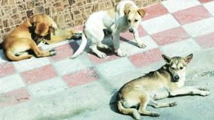 പട്ടിയിറച്ചി കഴിക്കുന്നത്,പട്ടിയിറച്ചിക്ക് വിലക്ക്,നാഗാലാൻഡ് ഭക്ഷണം,Nagaland food,dog meat