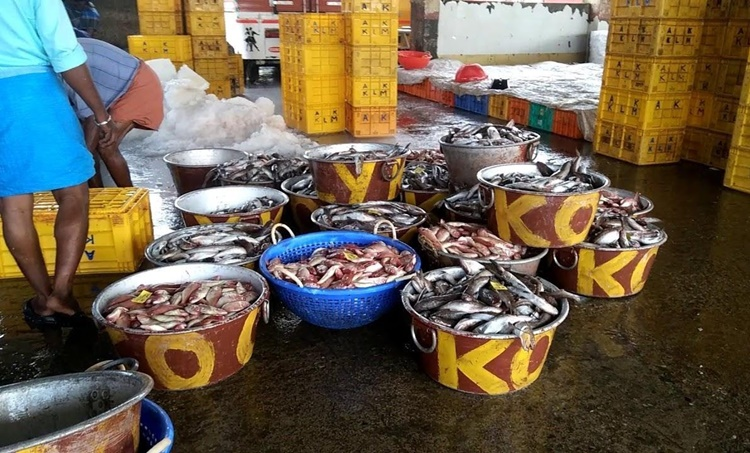Kollam district, കൊല്ലം ജില്ല, fish market, മത്സ്യ ചന്ത, covid 19, കോവിഡ് 19, iemalayalam, ഐഇ മലയാളം