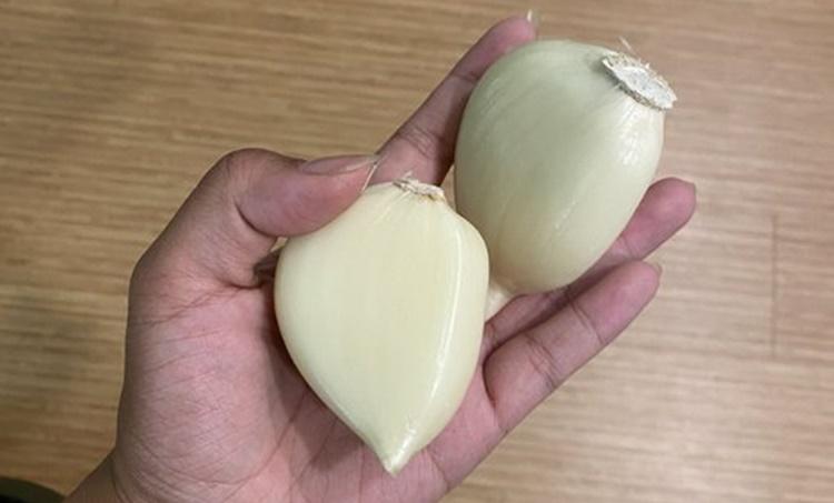 Garlic Elephant Garlic