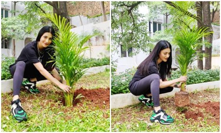Shruti Haasan Green India Challenge, Mahesh Babu, Hrithik Roshan, Rana Daggubati Shruti Haasan, Tamannaah Green India, ശ്രുതി ഹാസൻ