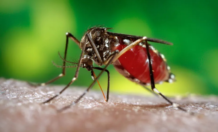 Dengue fever, Dengue fever prevention, Dengue fever causes, Dengue fever symptoms, ഡങ്കിപ്പനി, ഡങ്കി പനി, Indian express malayalam, IE malayalam