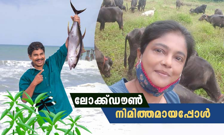 Manju Pillai, Vinod Kovoor, Manju Pillai farm life, Vinod Kovoor fish business, മഞ്ജുപിള്ള, വിനോദ് കോവൂർ