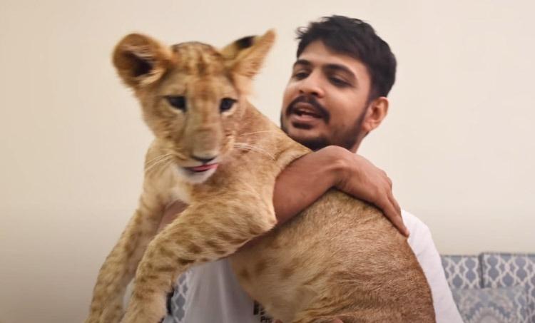 trending vedio, വീട്ടിൽ സിംഹത്തെ വളർത്തുന്ന മലയാളി; വീഡിയോ, Malayalee raising a lion at home