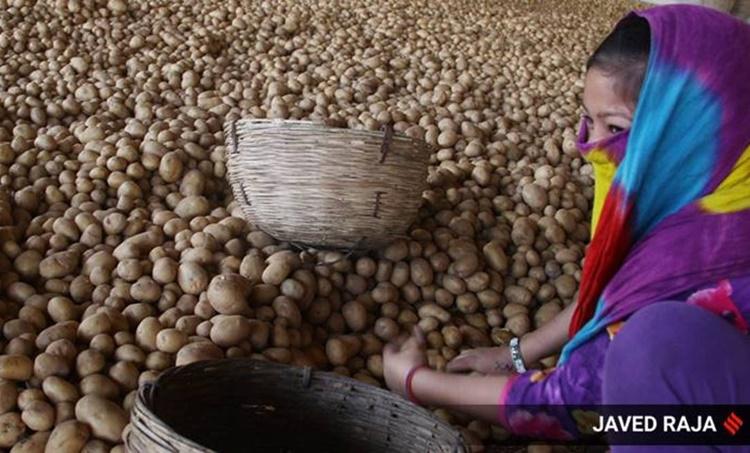 potato prices, potato price rise, pandemic impact on food price, crop price pandemic impact, indian express