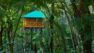 Kerala tree house, munnar tree house, thekkady tree house, wayanad tree house, vythiri tree house, konni tree house
