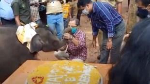 elephant calf Sreeku elephant calf Sreekutty, Kottoor Elephant Rehabilitation centretty, Kottoor Elephant Rehabilitation centre.