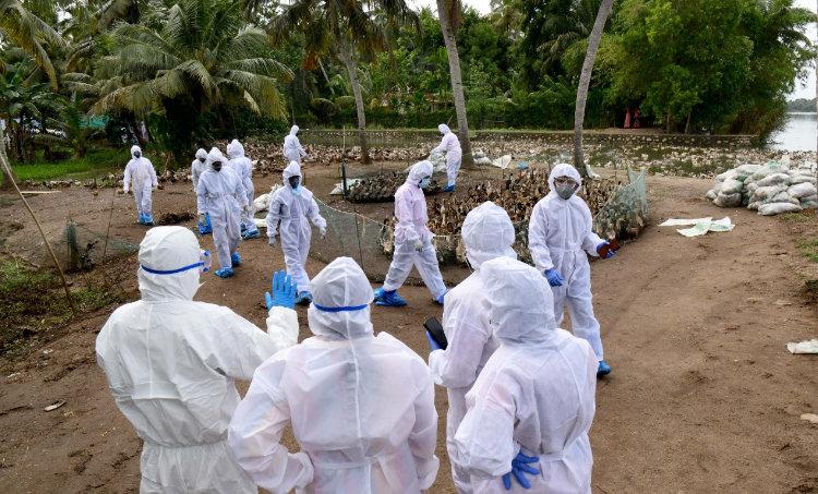 bird flu,bird flu situation,central government team,central government team in kerala,കേന്ദ്രസംഘമെത്തും,പക്ഷിപ്പനി