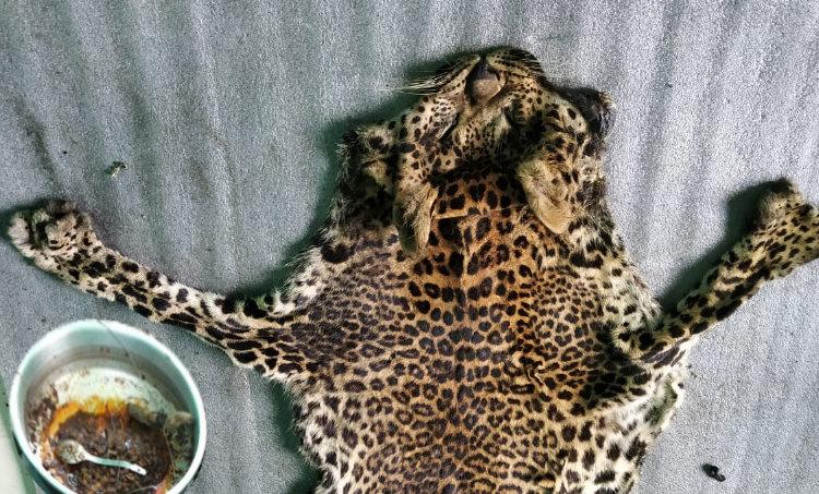 leopard killed and cooked, പുള്ളിപ്പുലിയെ കൊന്ന് കറിവച്ചു, ഇടുക്കിയിൽ പുള്ളിപ്പുലിയെ കൊന്ന് കറിവച്ചു, idukki, idukki news, kerala news, malayalam news, news in malayalam, malayalam latest news, ഇടുക്കി, ഇടുക്കി വാർത്തകൾ, വാർത്ത, മലയാളം വാർത്ത, ie malayalam