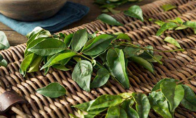 curry leaves, ie malayalam