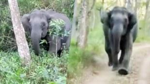Viral video, വൈറൽ വീഡിയോ, elephant, ആന, കാട്ടാന, tourist, വിനോദ സഞ്ചാരികൾ, iemalayalam, ഐഇ മലയാളം
