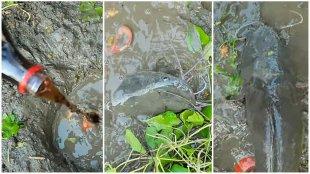 Firoz Chuttippara, Firoz Palakkad, Village Flood Channel, Unique Mud Fishing Using Coca Cola and Egg, ഫിറോസ്, ഫിറോസ് ചുട്ടിപ്പാറ, കൊക്കക്കോള മീൻപിടിത്തം, കൊക്കക്കോള മീൻപിടുത്തം, ഫിറോസ് പാലക്കാട്, വില്ലേജ് ഫുഡ് ചാനൽ, Malayalam Youtubers, Malayali Youtubers, Firoz and Ratheesh, ഫിറോസും രതീഷും, Malayali Vloggers, Malayalai Youtubers, മലയാളി യൂട്യൂബർമാർ, ie malayalam