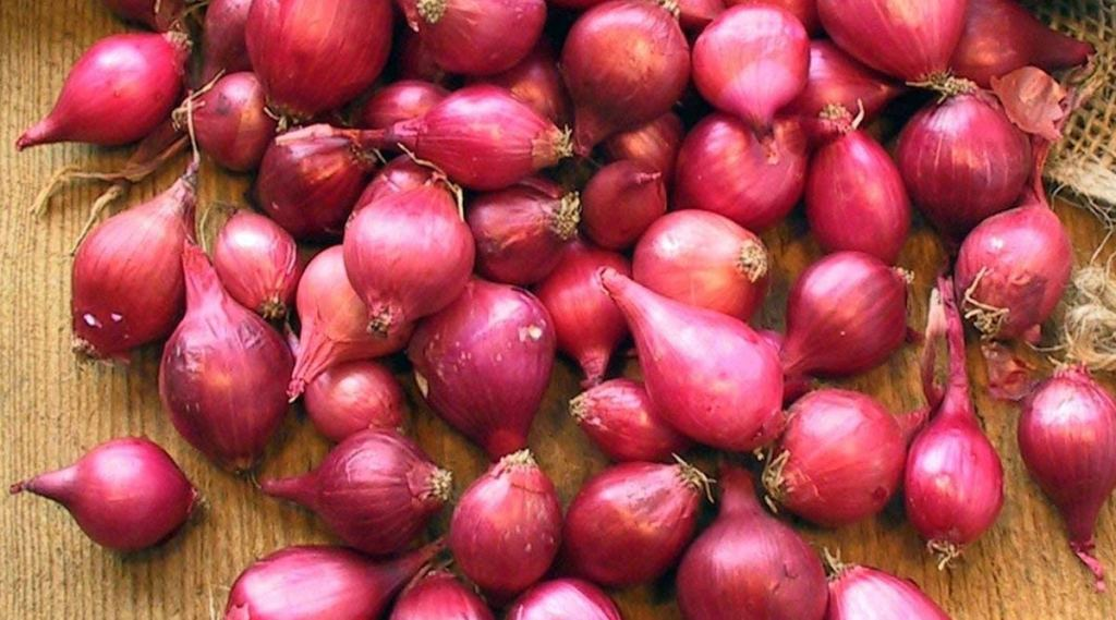 red onion, health, ie malayalam