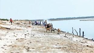 covid bodies river ganga, Poem on bodies in Ganga, Gujarat Sahitya Akademi, Gujarati poet Parul Khakhar, poem sha vahini ganga, UP dead bodies, UP dead bodies in ganga, ie malayalam