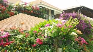 beautiful garden, garden tips, garden videos